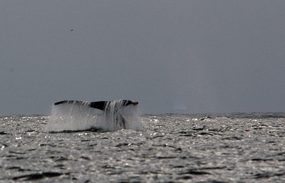 Whale tail  0029