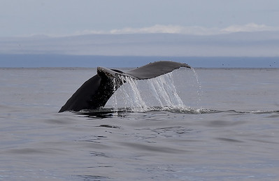 whale-tail79050049