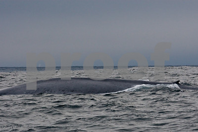 Blue Whale     20070831-_V2R6111-Edit-Edit