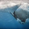Big Mother Humpback Whale