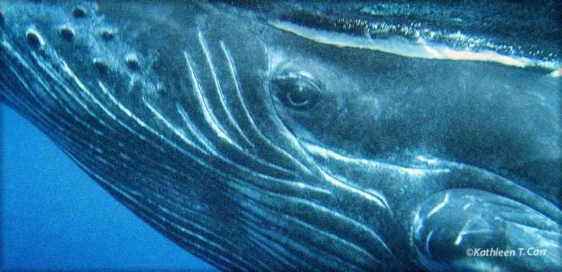 Whale Eye Contact