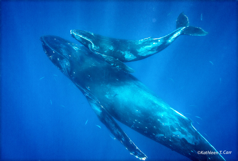 Humpback Mom and Baby