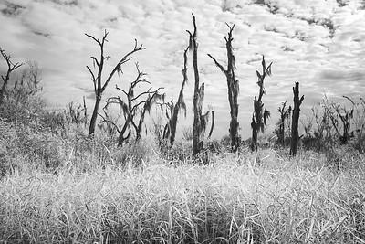 Infrared B& W landscape