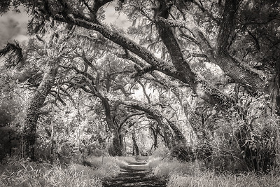 Infrared B&W Path in the wood