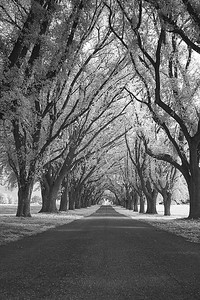 Infrared B&W Road throught trees
