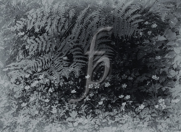Texture of the Rainforest