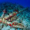 Sunken Anchor 17th Century, Lost Anchor, St. Eustatius