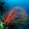 Coral, Wakatobi, Indonesia