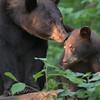 MN Black Bears