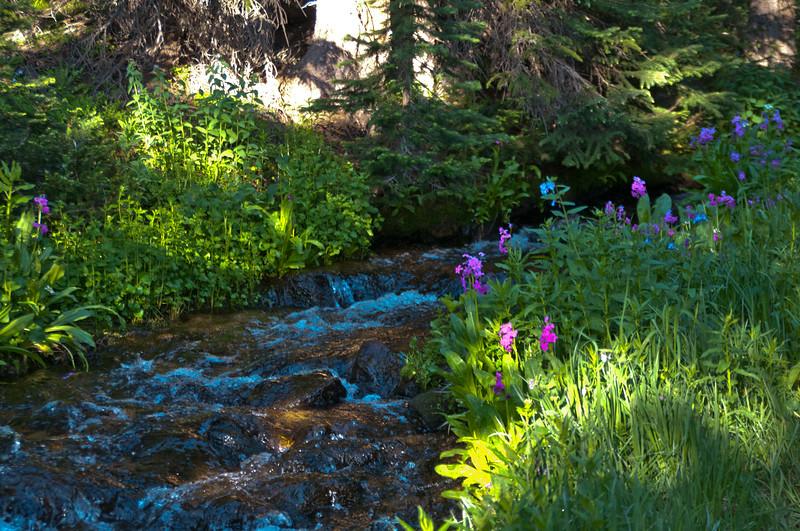 Second Creek in July