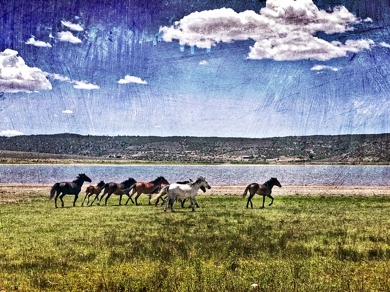Wild Horses of Wild Horse Mesa in San Luis, Colorado.