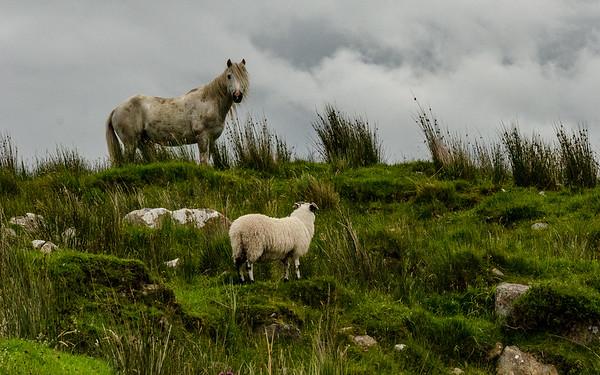 Kilarney, Ireland 2015