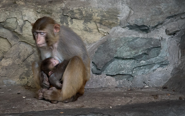 Mom and Baby. Beijing Zoo. Beijing  China 2016