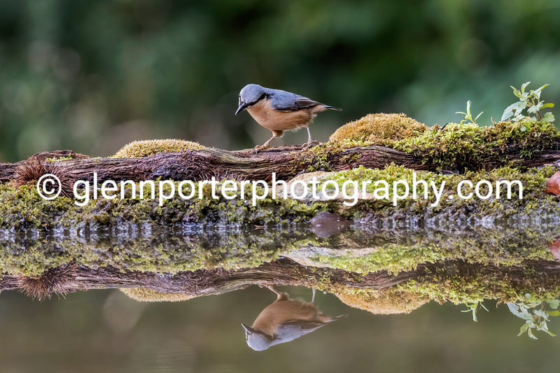 Nuthatch....what you looking at?