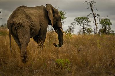 Kruger National Park,, South Africa 2005