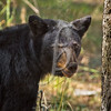 Nice Bear!