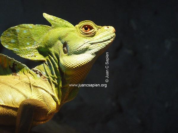 Costa Rica 2012-0882