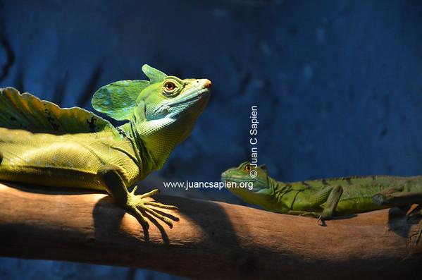 Costa Rica 2012-0710