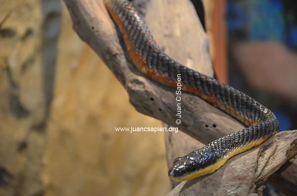 Costa Rica 2012-0698