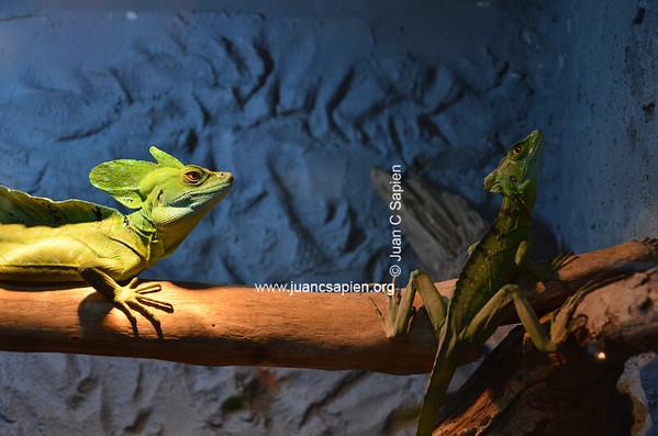 Costa Rica 2012-0701