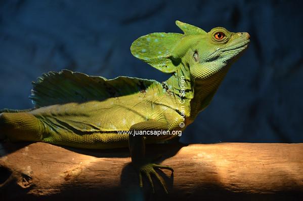 Costa Rica 2012-0692