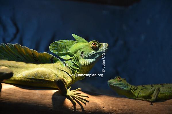 Costa Rica 2012-0707