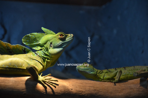 Costa Rica 2012-0706