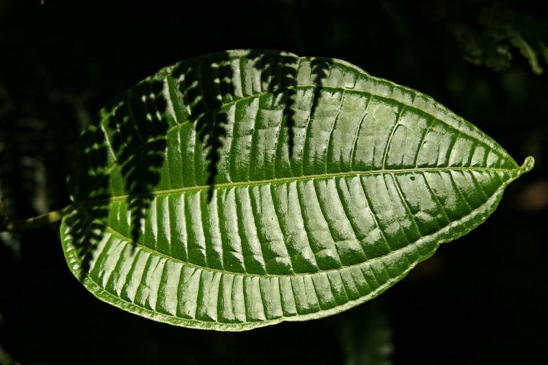 Costa Rica004
