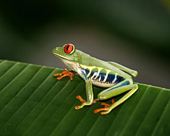 Costa Rica009