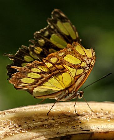 Costa Rica018