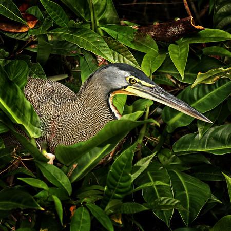 Costa Rica020