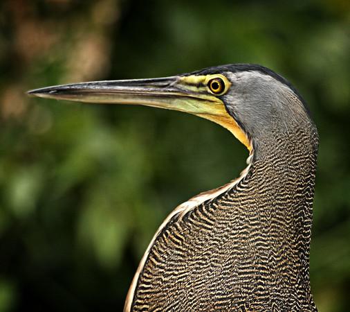 Costa Rica021