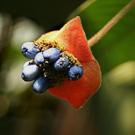 Costa Rica017