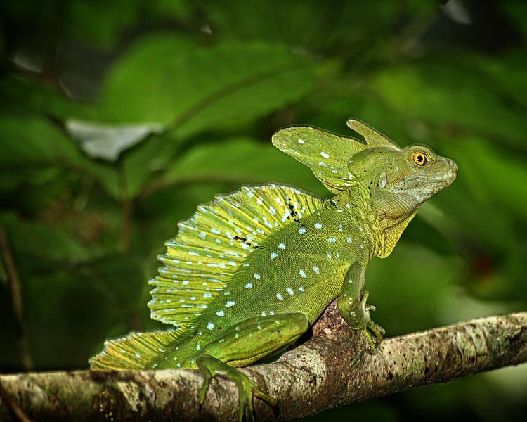 Costa Rica012