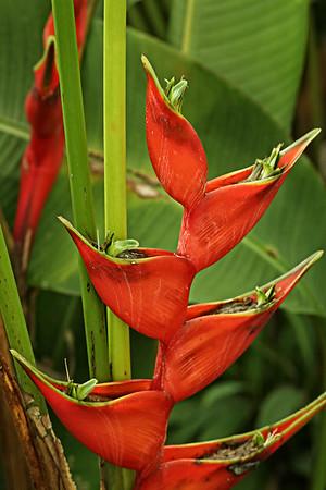 Costa Rica008