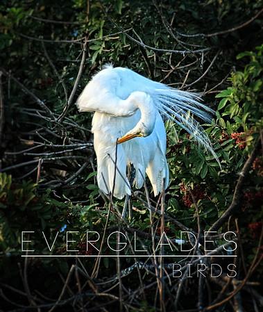 Everglades: Birds