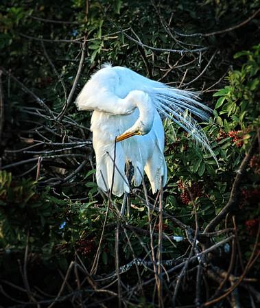 Everglades, Corkscrew Swamp, Venice Audubon Refuge