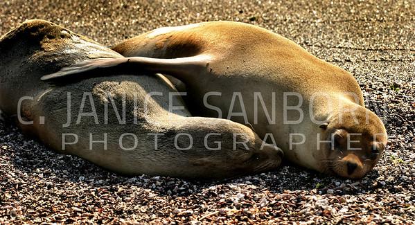 Galapagos06