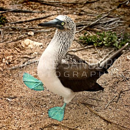 Galapagos07