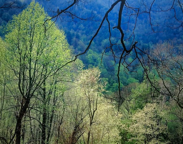 Appalachian Spring, Study 2