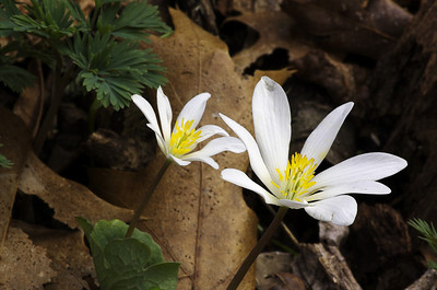 Spring Wildflower