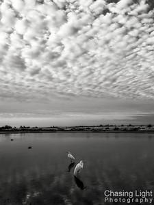 Egret Landscape