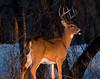 IMG_6281 - Deer sRGB