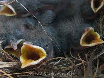"""Nesting"""