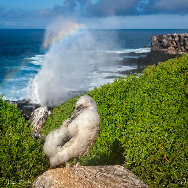 Baby Nazca and the Blowhole