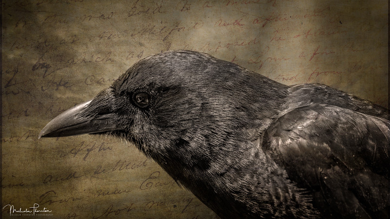 The Raven Nevermore