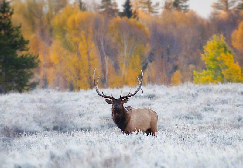 Wildlife - Mammals