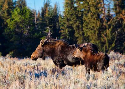 Mama Moose & Baby