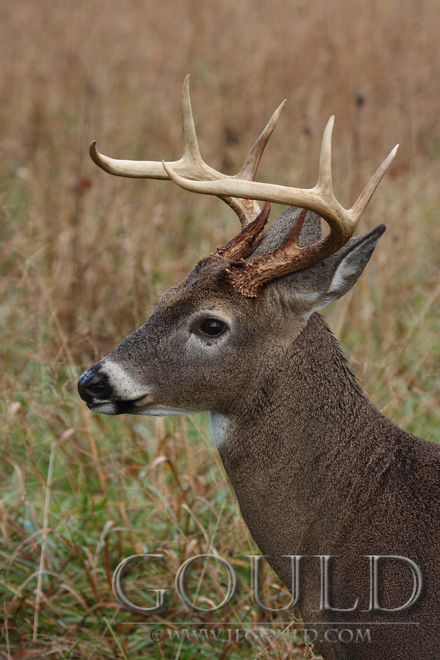 Buck Profile
