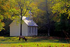 North American Elk (Cervus elaphus) in front of the Palmer Chapel, Cataloochee Valley, North Carolina.